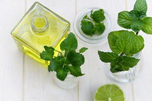 tea tree oil guida