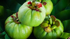 pianta garcinia cambogia