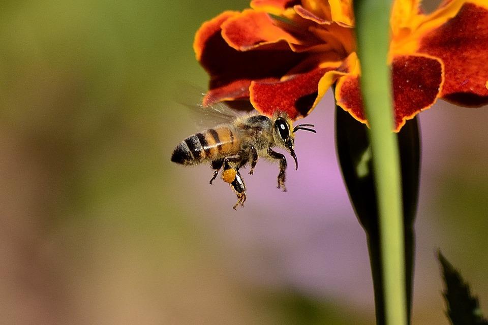 Crema al veleno d'api: Come scegliere la migliore