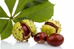 Ippocastano ingrediente varilux premium