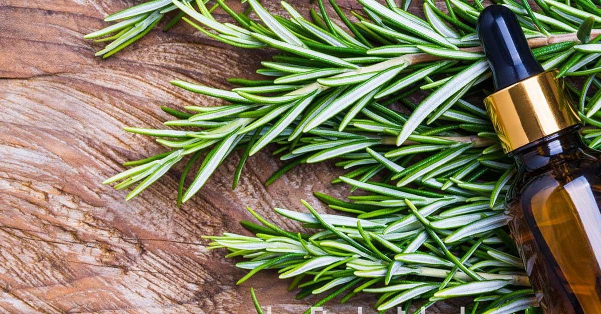 Olio essenziale di rosmarino puro
