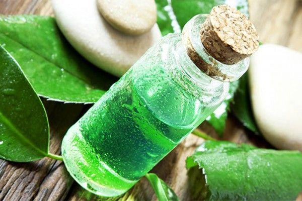 Tea Tree Oil: Proprietà, usi e benefici