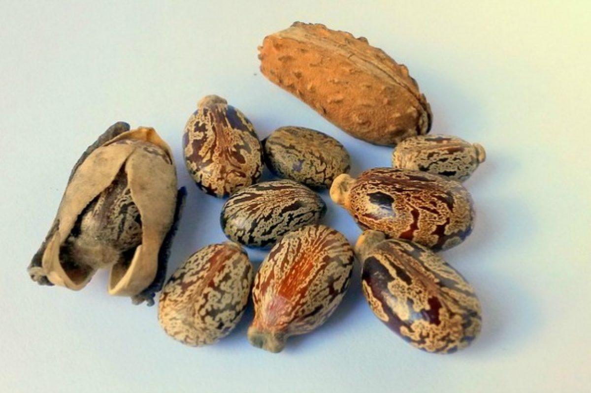 Olio di semi di ricino