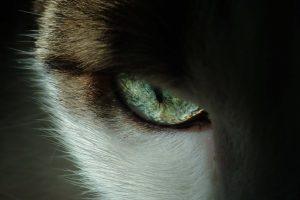 Matita occhi gatto