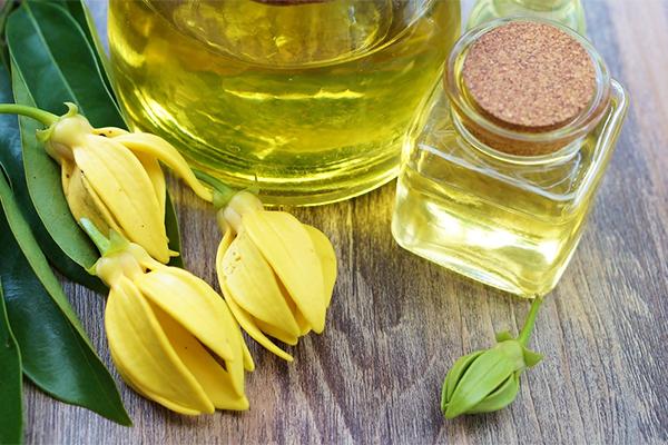 Olio essenziale di ylang ylang: Proprietà, usi e benefici