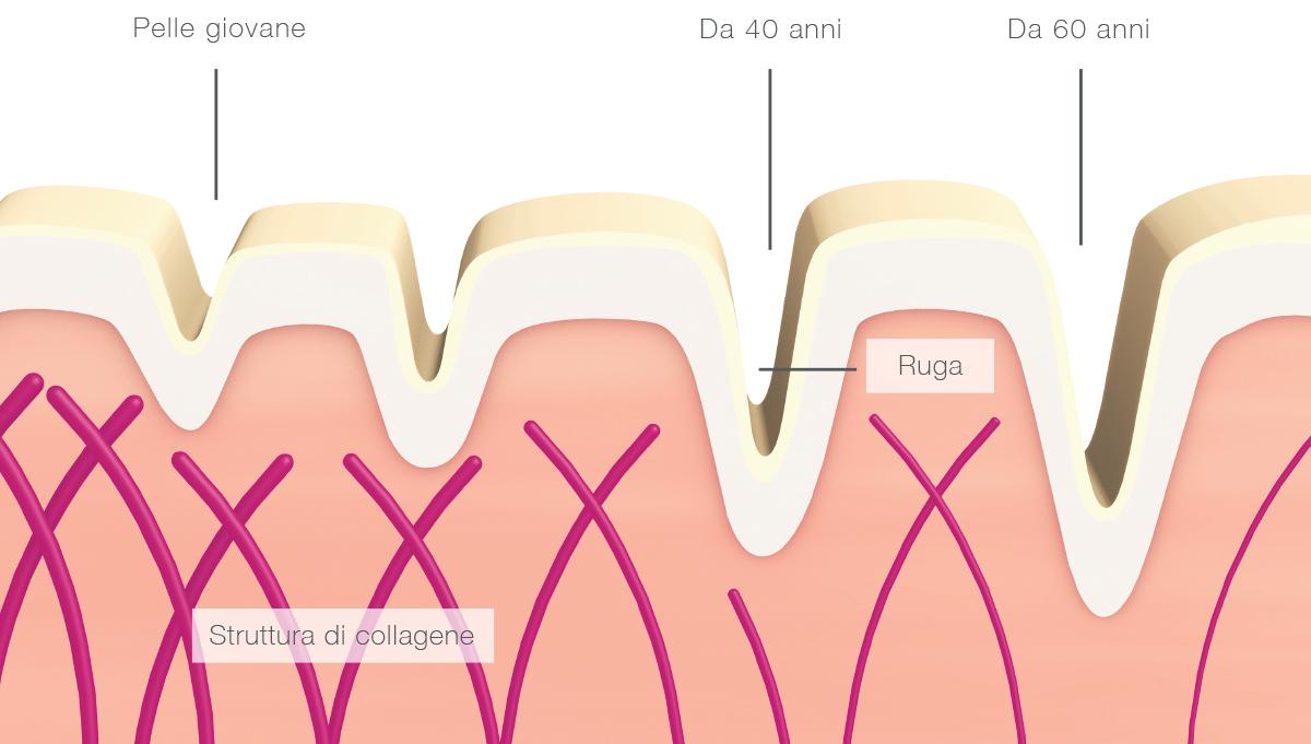 Struttura del collagene
