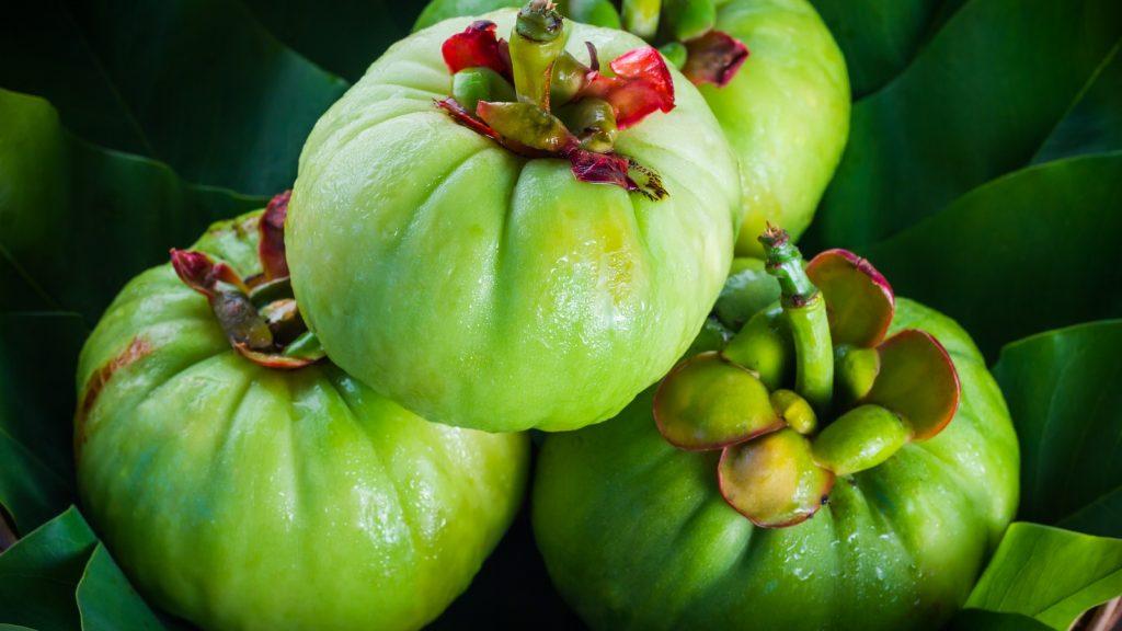 Garcinia Cambogia Dieta Dent